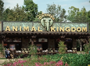 Disney's Animal Kingdom in Orlando