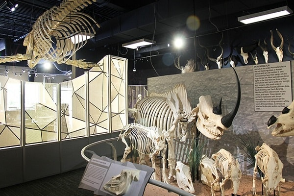 Skeletons Museum of Osteology in Orlando